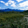 clearwater-park-wells-gray-015