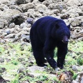 tofino-BC-ours-08