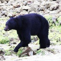 tofino-BC-ours-15