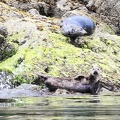 tofino-BC-ours-27